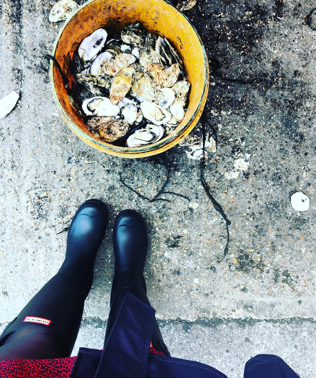 Best Places to Visit in England - Bucket of oysters caught in Whitstable