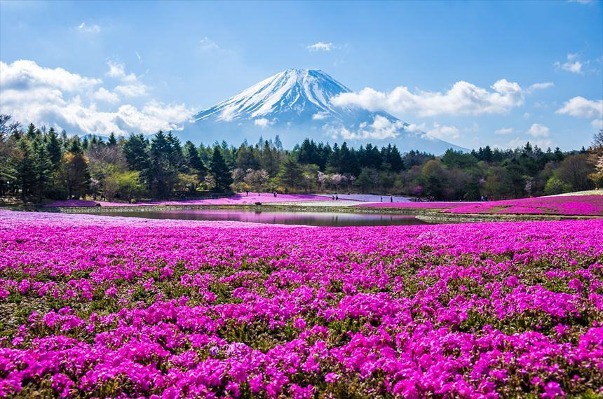 best places to visit in japan Hitsujiyama park @andromeda.g94