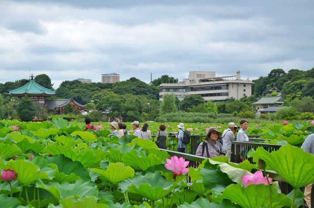best places to visit in japan ueno park @nicoleluzzitelli