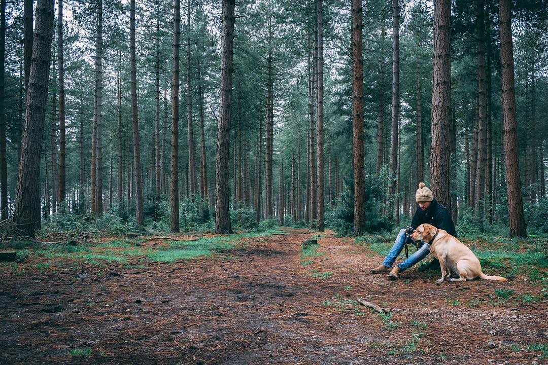 Best Places to Visit in England - Man with his dog in The New Forest
