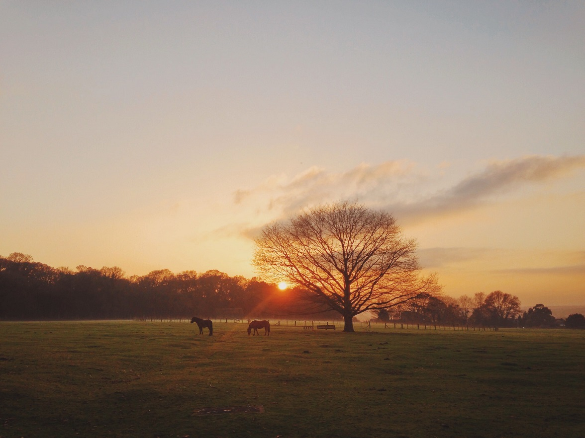 Best Places to Visit in England - Horses grazing in a field while the sun sets in the background