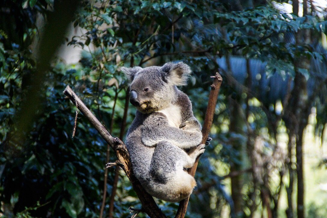 Things to Do on The Gold Coast - Currumbin Sanctuary