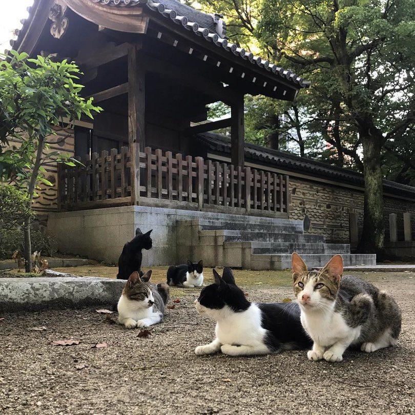 Best Places to Visit in Japan - Fukuoka
