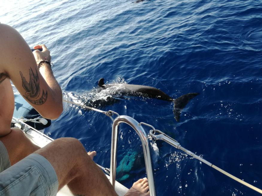 que faire a tenerife - dauphin