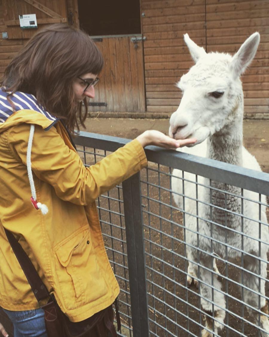 où dormir a londres - fille qui donne à manger à un lama