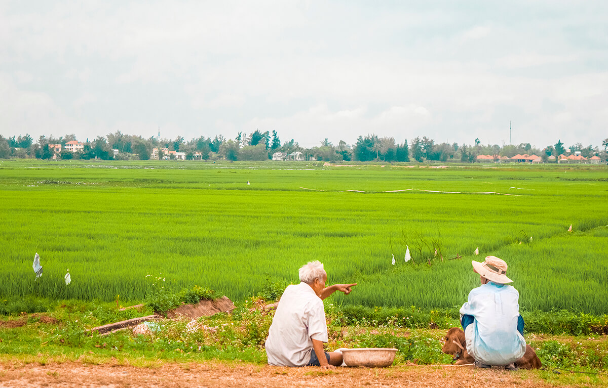 backpacking southeast asia - vietnam - rice fields