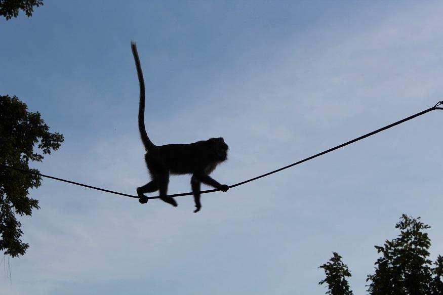 backpacking thailand - monkey