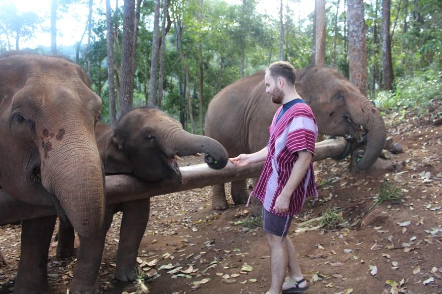 backpacking thailand - elephants