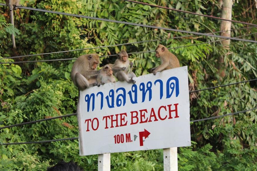 backpacking thailand - the beach