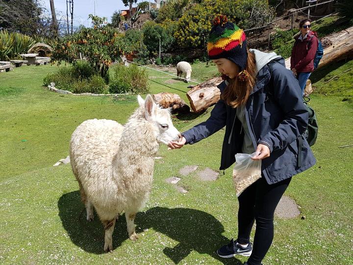 dove vedere i lama - bolivia