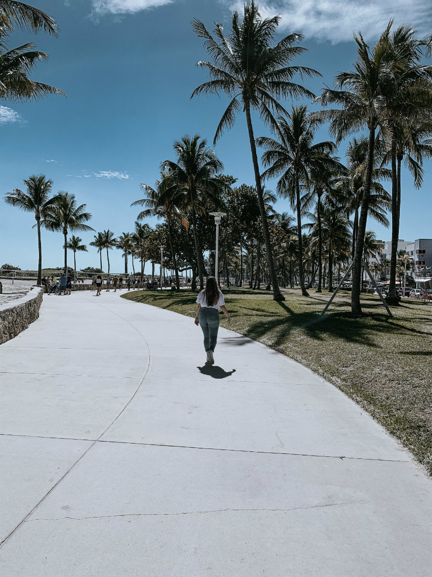 free things to do in Miami - palm trees