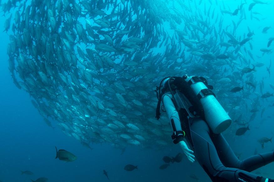 Tauchen Thailand - Taucher und Fische