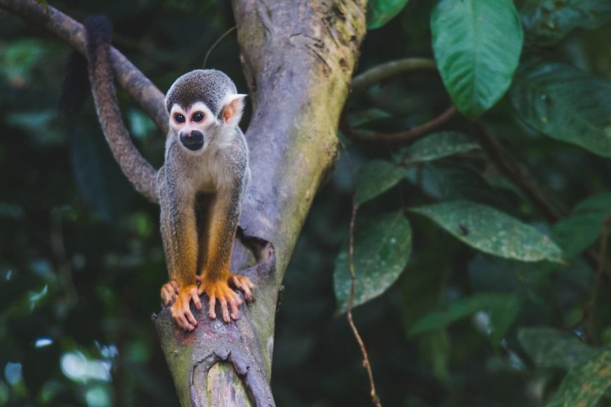 backpacking brazil, monkey sitting on a tree